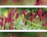 Three series I Photography
