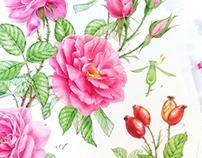 Watercolor flowers & plants