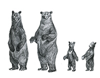 Scana Energy Bears