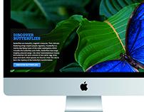 Discover Butterflies