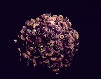 Hydrangea & Rose