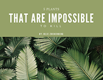 5 Plants That Are Impossible to Kill