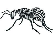 Calligrammi - Typography -'15/'16