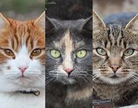 Cats of Chisinau