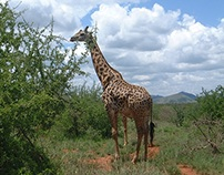 Attractive and Gorgeous Travel Spots of Kenya