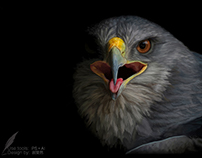 写实手绘—鹰