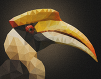 Hornbill Illustration