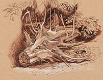 Sketches of a fragment of an old tree