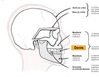 Dentist diagram