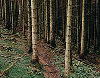 Whinlatter Forest | 2016