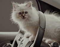 Opel Corsa - Hot Cats