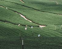 Riyang Teayard | Origin