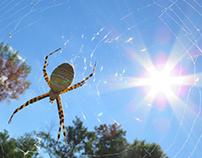Garden Spider & Victim