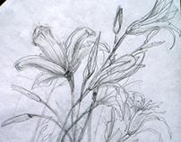 non fiction-Sketches