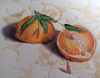 Still Life Colored Pencil Drawings