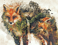 The Red Fox Surrealism Nature Series