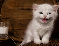 Cruciate Ligament Ruptures in Cats