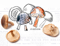 Food Illustration | Mushroom Postcards
