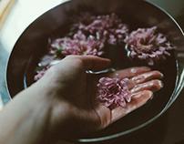 Ho sognato orchidee ed ho comprato margherite