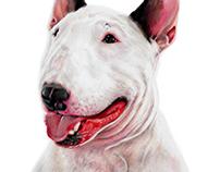Retratos Mascotas
