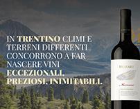 Vini Trentini - Portale