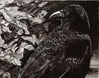 Crow #3
