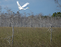 2 Hrs. on Loop Road- A visit to the Florida Everglades