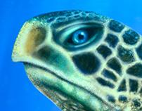 SEA TURTLE - ILLUSTRATION
