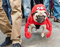 Tompkins Square Halloween Dog Parade 2014
