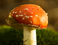 Mushrooms Photography