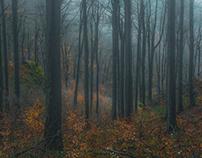 Forests of Dobogókő