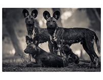 Painted Wolves: Family Portrait