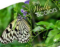 The Butterfly House | Branding and Ad Campaign