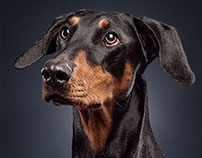Dog Portraits by Daniel Sadlowski // Part 3