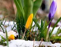 Meteorological spring