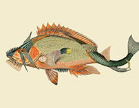 Infertile fishes: Etropus Dentatus (collage)