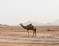 Exploring Sinai | Sharm El Sheikh