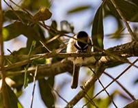 Fairhope Wildlife