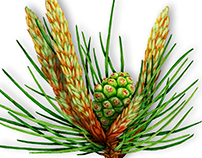 100 botanical illustrations for Fares