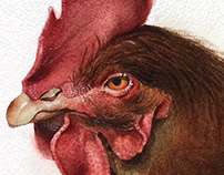 Rhode Island Red Rooster Illustration