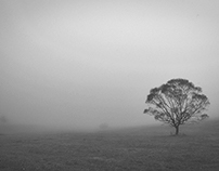 Autumn minimal mist&tree on fuji provia