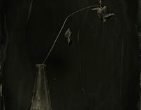 still life | ambrotipe | tintype