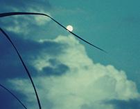 Moon over grassblade