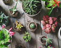 """PIRHONIT"" // Flowers Shop"