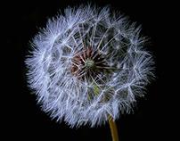 #170 - An Artificial Nature