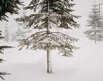 frozen parking space|大雪的停車場旁