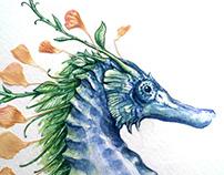 .Seahorse.