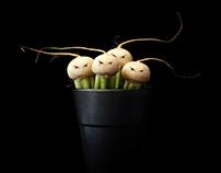 Mairübchen | May turnip