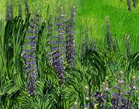 Fresh pond wild flowers