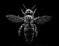 Honey Bee - Colony collapse disorder